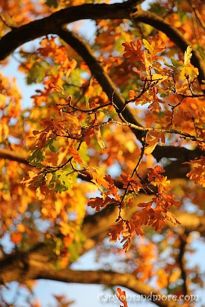 Autumn Leaves 8